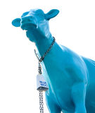 Large blue cow Royalty Free Stock Images