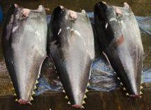 Large body of Tuna Stock Photos