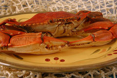 Large Boiled Crab on Plate. A large boiled blue crab served on a plate Stock Photography
