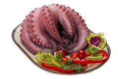 Large boiled octopus Stock Image