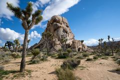 Large Boulder And Desert Vegetation On A Partly Cloudy Day In Joshua Tree National Park In California Royalty Free Stock Photos