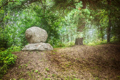 Large boulder in dense forest Royalty Free Stock Photography