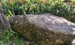 Large boulder near a tree Royalty Free Stock Image