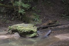 Large boulder next to stream. A large moss covered boulders next to a slow moving creek in Hocking Hills State Forest at the Old Man`s Cave area near Logan, Ohio stock photos