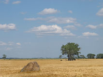 Large boulder in a prairie wheat field. Stock Images