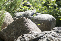 A large boulder in the sun on a summer day stock photos
