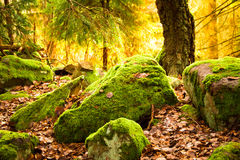 Large boulders covered in moss Royalty Free Stock Photography
