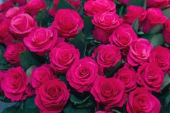 Large bouquet of beautiful purple roses stock photo