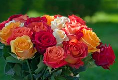 Large bouquet of colorful roses on a green background. Stock Images