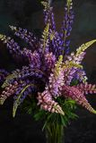 A large bouquet of colorful wild flowers of the lupine in a glass vase. Isolated on dark background. Closeup royalty free stock image