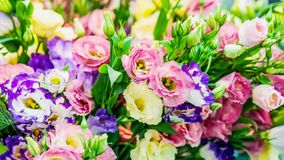 A large bouquet of eustoma in a flower shop is sold as a gift box. Farmer`s market. Background. A large bouquet of eustoma in the flower shop is sold as a gift royalty free stock photo