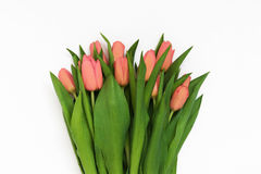 Large bouquet of fresh pink, purple, crimson, lilac tulips, isol Royalty Free Stock Photos