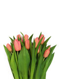 Large bouquet of fresh pink, purple, crimson, lilac tulips, isol Stock Images