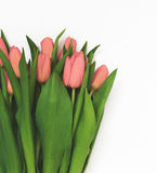 Large bouquet of fresh pink tulips, isolated on white background. In vintage style Stock Photo