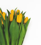 Large bouquet of fresh yellow tulips, isolated on white backgrou. Nd in vintage style Stock Photo