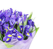 A large bouquet of irises. The big beautiful bouquet iris isolated on the white stock photos