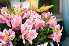 A large bouquet of multi-colored alstroemerias in the flower shop are sold in the form of a gift box. Colorful Alstroemeria flowers. A large bouquet of multi stock images