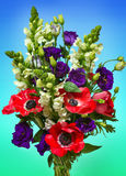A large bouquet of red anemones Stock Photo