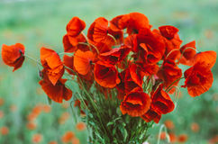 Large bouquet of red poppies Stock Photography