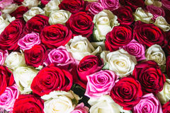 A large bouquet of roses Stock Photos