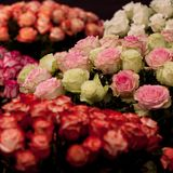Large bouquets of roses. Beautiful large bouquets of multi-colored roses royalty free stock photo