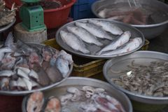 Large bowls with fresh fish. Shrimps and fish semi-finished products on the counter of the fish market. Vietnam stock photos