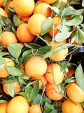 Fresh oranges with green leaves royalty free stock image