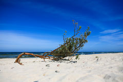 large branch on the sandy beach Stock Photo