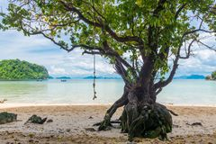 Large branched tree on the shore in the tropics. Against the sea Royalty Free Stock Photography