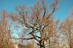 Large branches Royalty Free Stock Photos