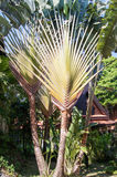 Large branches of palm trees Royalty Free Stock Image