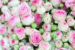 Large bright bouquet of freshly cut big roses. Royalty Free Stock Image
