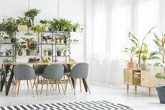 Bright window in dining room. Large, bright window in dining room interior with wooden cupboard, gray chairs and plants Royalty Free Stock Photos