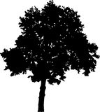Large broad-leaved tree silhouette. Illustration with broad-leaved tree silhouette isolated on white background Royalty Free Stock Photography