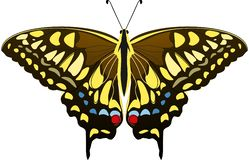 Large brown butterfly with blue, yellow and red spots. Mahaon butterfly Papilio machaon. Vector illustration. royalty free illustration