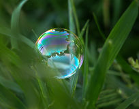 A large bubble with a reflection in the green grass Royalty Free Stock Image