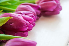 Large buds of tulips on the table. Large buds of purple tulips on the table Stock Images