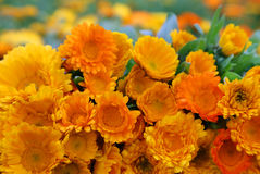 Large bunch of calendula Stock Images