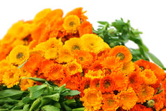 Large bunch of calendula Royalty Free Stock Photography