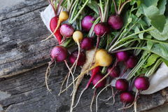Large bunch of colorful radishes Stock Photography