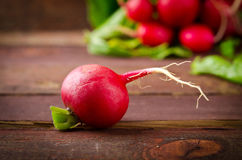 Large bunch of fresh Organic vegetables, radish on old wooden table. Closeup Stock Photos