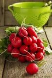 Large bunch of fresh radish Royalty Free Stock Photo