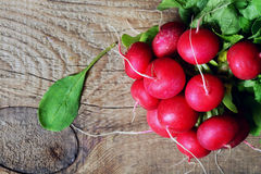 Large bunch of fresh radish. On dark boards , closeup Royalty Free Stock Image