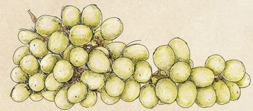 A large bunch of grapes. Fruita large bunch of grapes Stock Photography