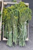 Large bundles of dill and lie for sale in the storefront at the grocery store. stock photography