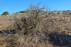 Large bush of dry plants Royalty Free Stock Photo
