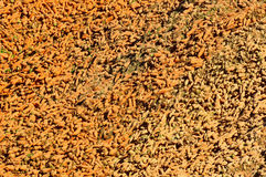 Large Carrot Pile Background Royalty Free Stock Images