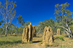 Large Cathedral Termite Mounds Stock Image