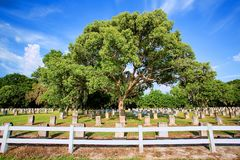 Large Cemetery, Graveyard With Multiple Headstones. And a large oak tree in the center stock photo