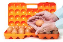 Chicken egg lies in palm of plastic container Stock Photography